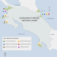 Costa Rica Turtles - Seasons and Nesting Map
